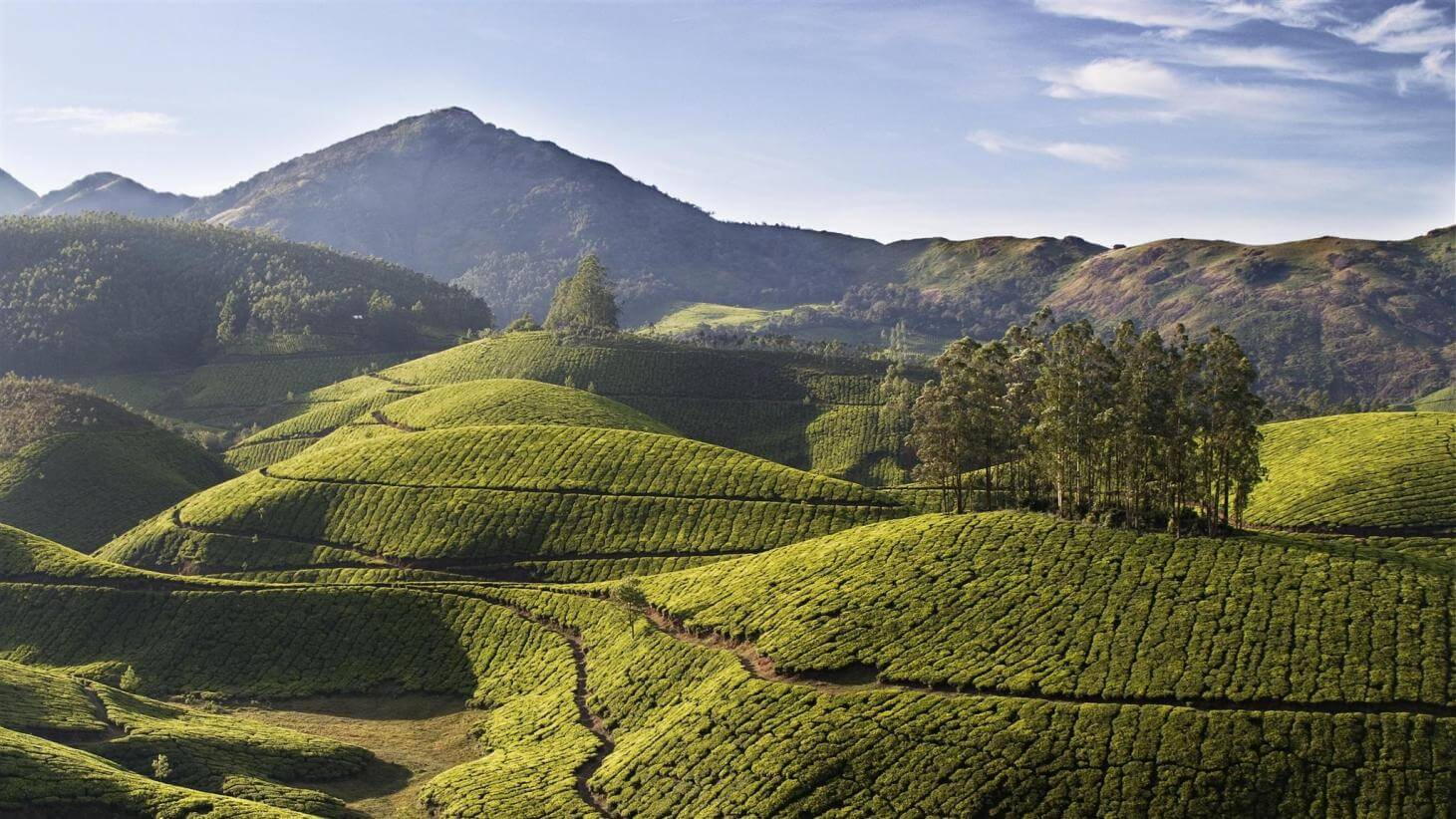 Best of Munnar 2 Nights 03 Days